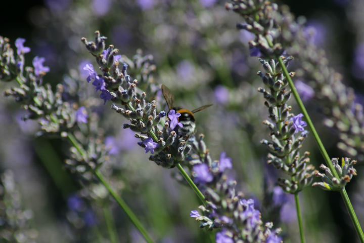 herbalism